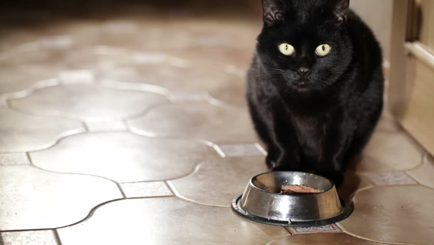 Black cat is eating at home. - HD stock footage clip