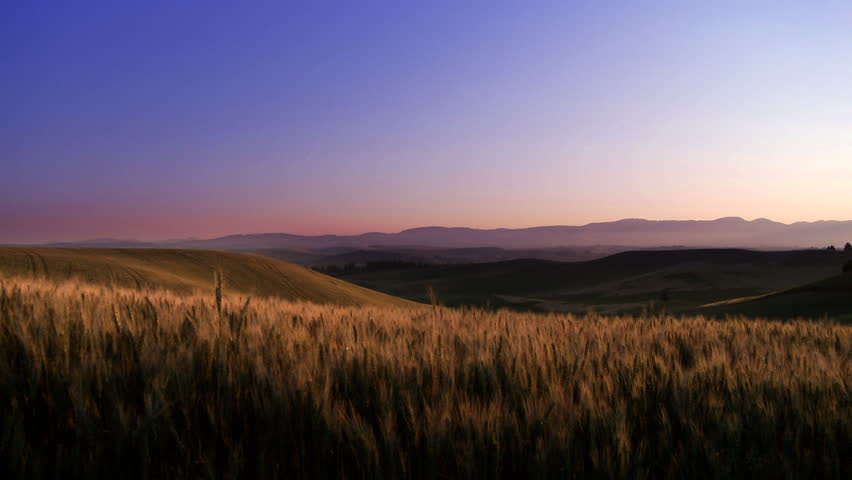 Wheat Field Sunrise - HD stock footage clip