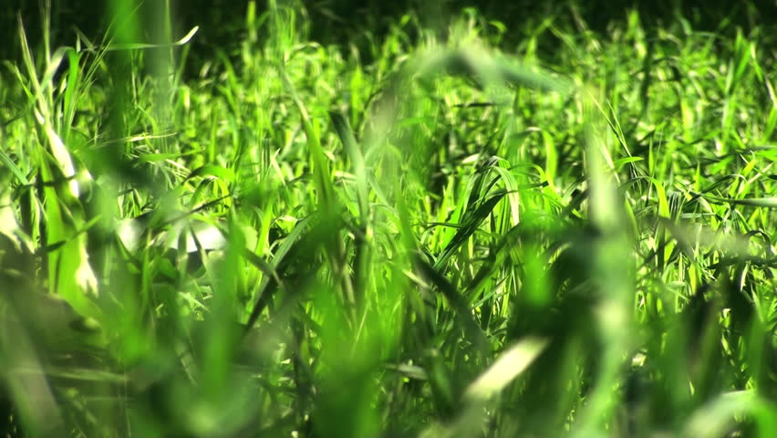 Grass blows in wind V2 - HD - HD stock footage clip