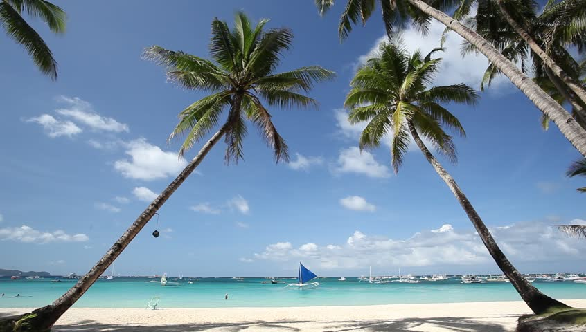 Two palms on beautiful tropical beach - HD stock video clip