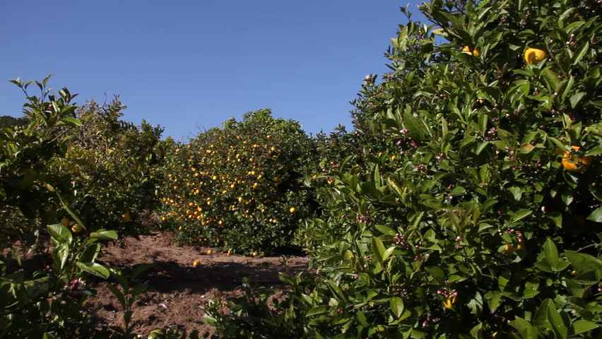 pan across lemon Grove