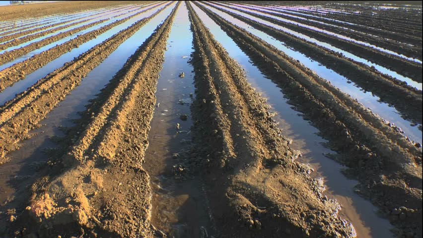 Agricultural farm irrigation ditches flow with water that soaks, nourishes rich rows of soil. 1080p