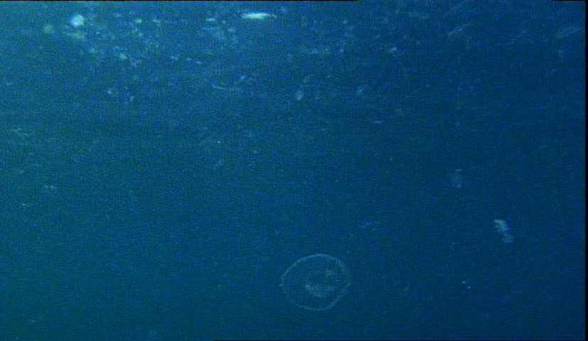 Zooplankton In Ocean Stock Footage Video 3516749 ...