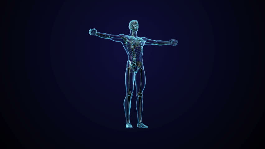 Human anatomy - CG animated seamless loop - HD stock footage clip