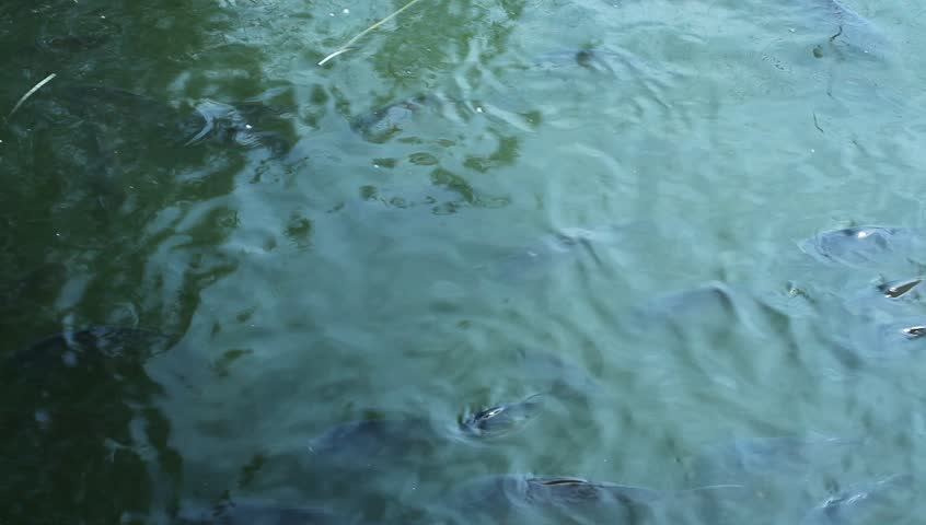 Fish in water | Shutterstock HD Video #3531542