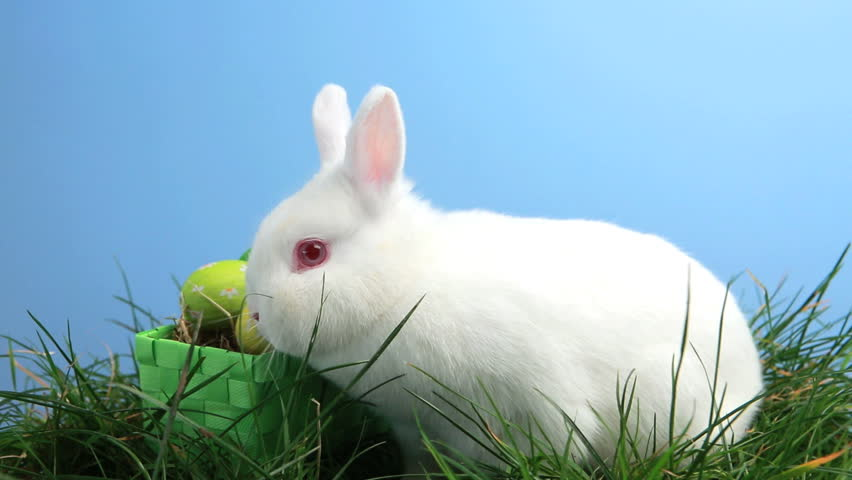 bunny rabbit sniffing around - photo #1