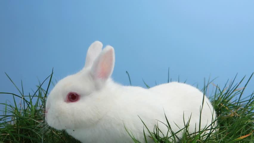 bunny rabbit sniffing around - photo #4