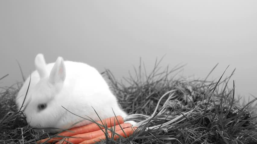 bunny rabbit sniffing around -#main