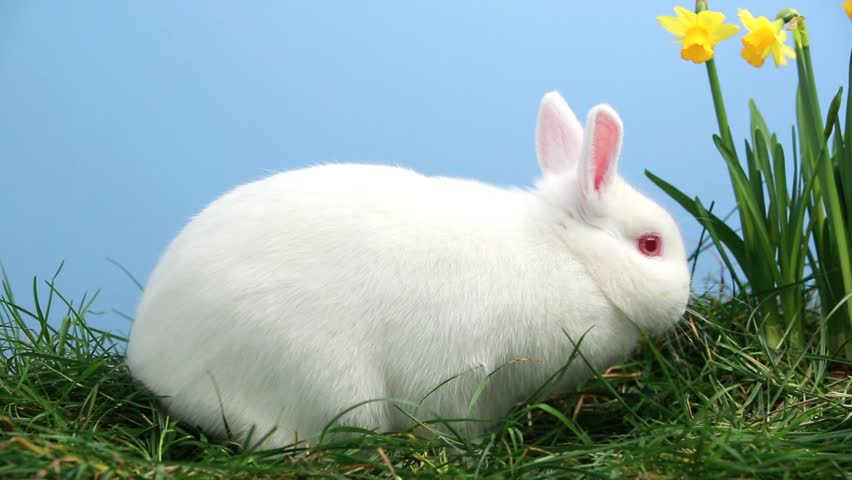 bunny rabbit sniffing around - photo #9