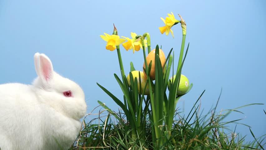 bunny rabbit sniffing around - photo #10