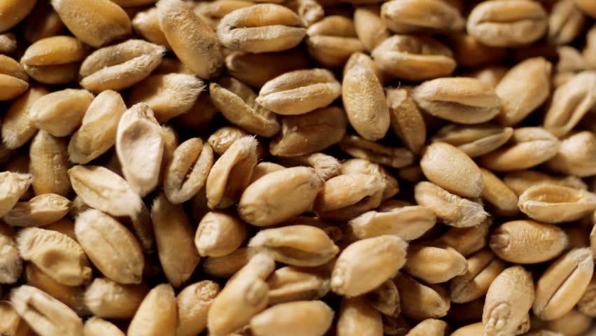 Wheat Grains CU - HD stock footage clip