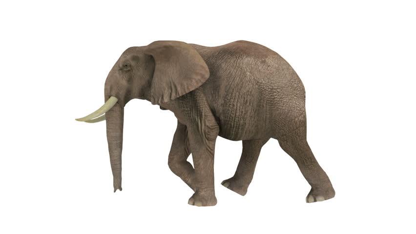 elephant stock footage video 3574850 shutterstock