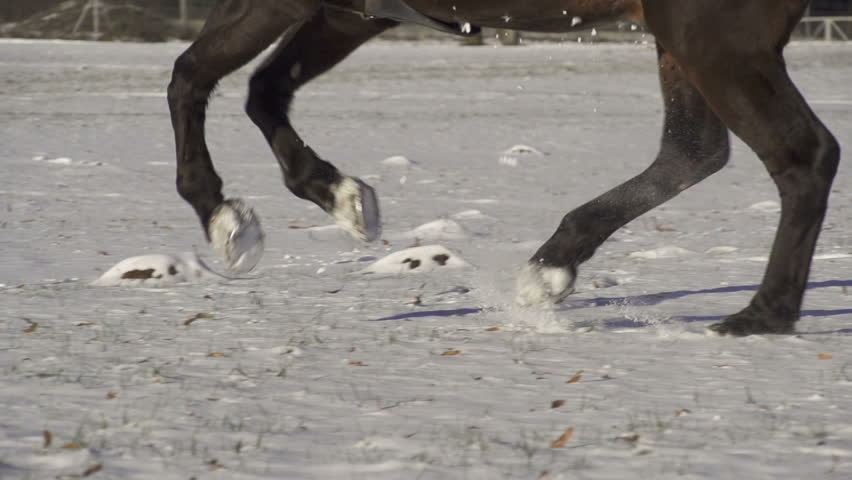 SLOW MOTION: horse galloping through the snow - HD stock video clip