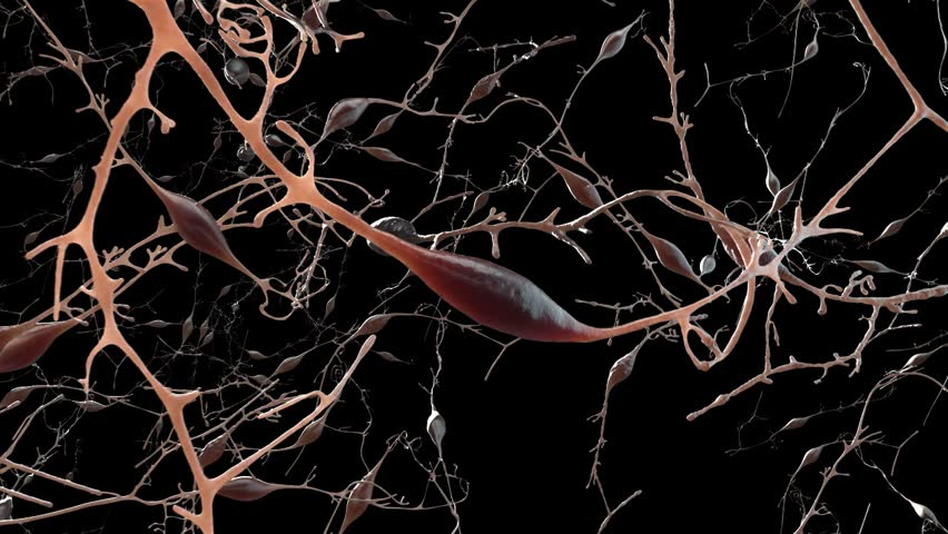 Slow camera pan over network of neurons nerve cells in human brain without post production after effects - HD stock footage clip