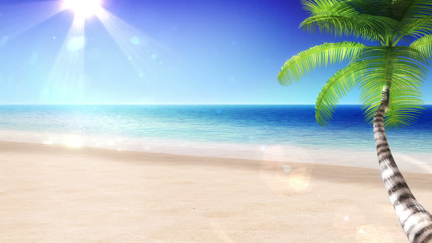 sea and sun  tropical beach with palm tree  looped