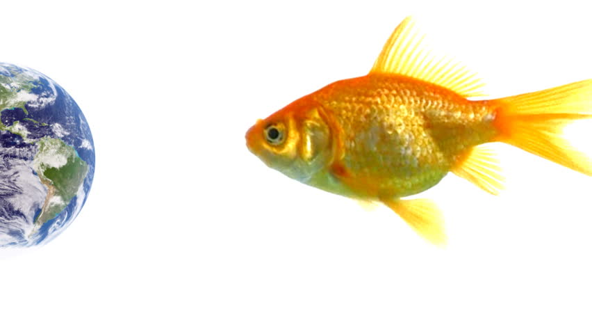 4k hd amazing goldfish - photo #11