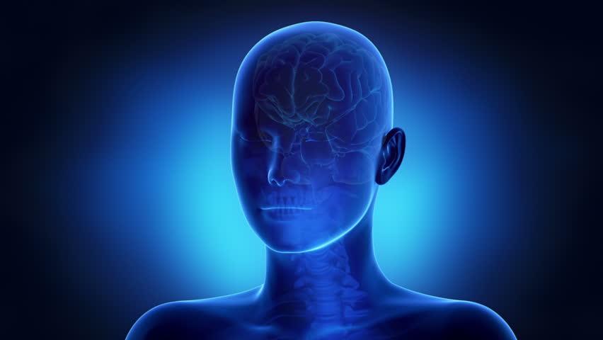 Woman brain anatomy | Shutterstock HD Video #3705449
