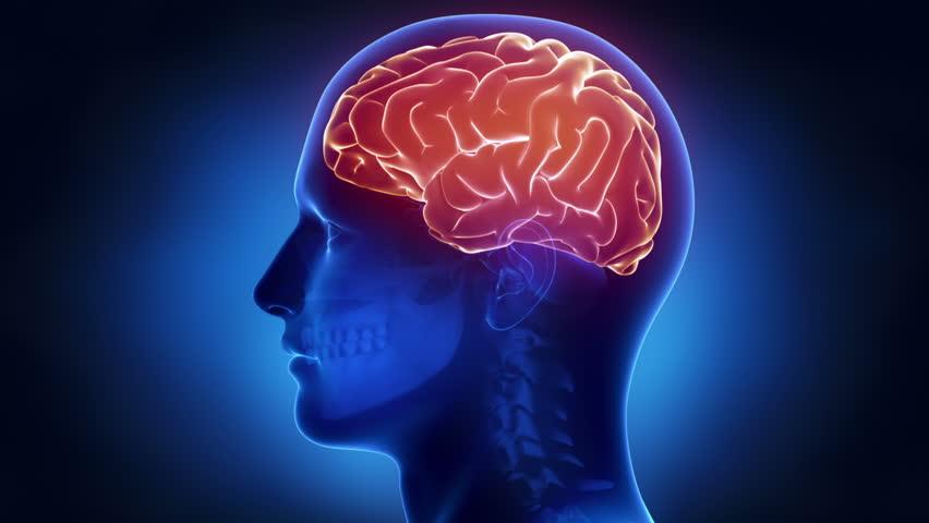 human brain medical xray scan in loop stock footage video