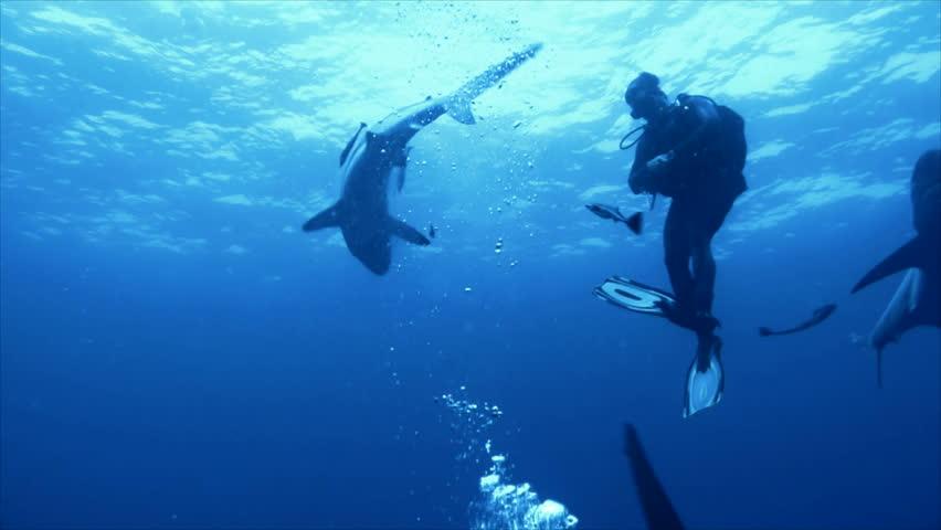 sharks surrounding single scuba diver