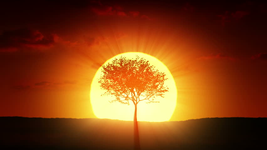 Growing tree at sunrise | Shutterstock HD Video #3777728