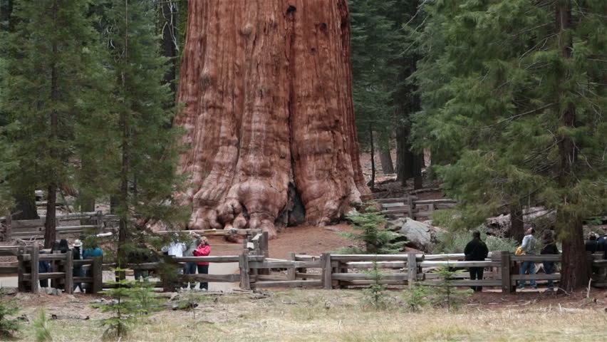 SEQUOIA NATIONAL PARK, CALIFORNIA APR 2013: Tourists Sequoia National Park General Sherman Tree. Sierra Nevada mountains east of Visalia. Established September 25, 1890. The park spans 404,063 acres. - HD stock footage clip