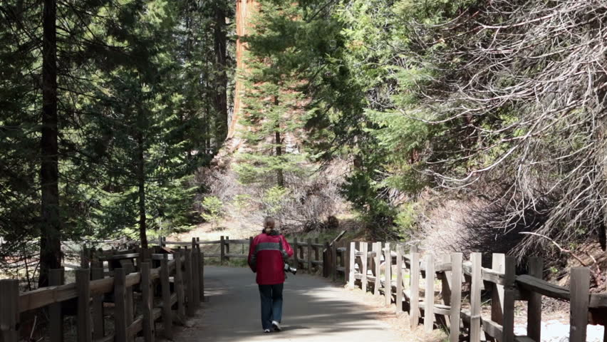 Woman photographer walking trail Sequoia National Park. Kings Canyon National Park in southern Sierra Nevada California. General Grant Grove preserves giant sequoias, including General Grant Grove. - HD stock footage clip