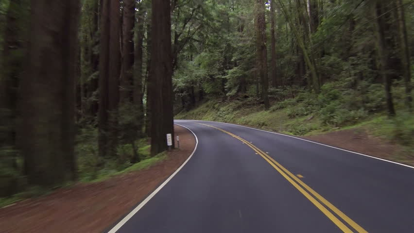 Driving through California redwood forest Point Of View left side of road. Vacation travel in vehicles along scenic byway and roads. Redwood National and State parks with old and new growth trees. - HD stock video clip