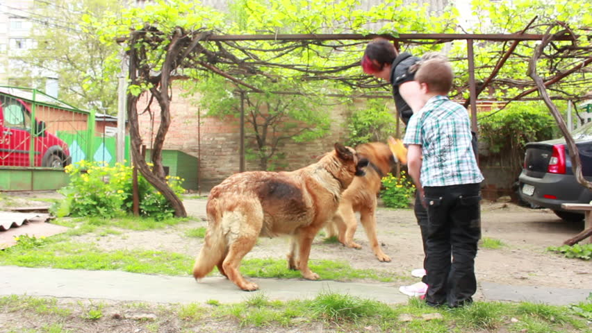 German Shepherd dog with puppies in the yard  - HD stock footage clip