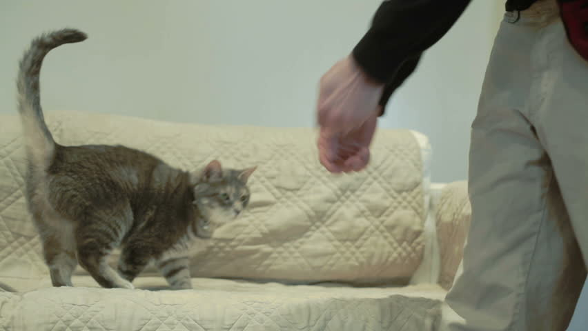 Cat playing on a couch at home - HD stock video clip