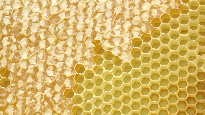 Honeybees make their way across a honeycomb, with capped cells of honey. HD