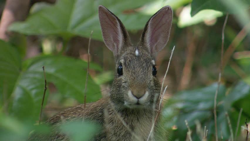 Close up of rabbit | Shutterstock HD Video #3915140