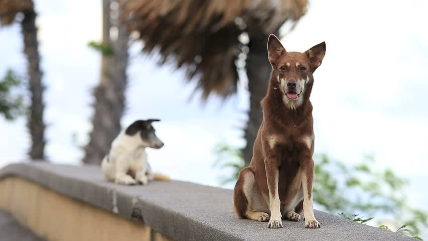 Two dogs sit down and looking - HD stock footage clip