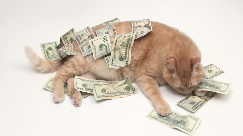 petco worlds best cat litter
