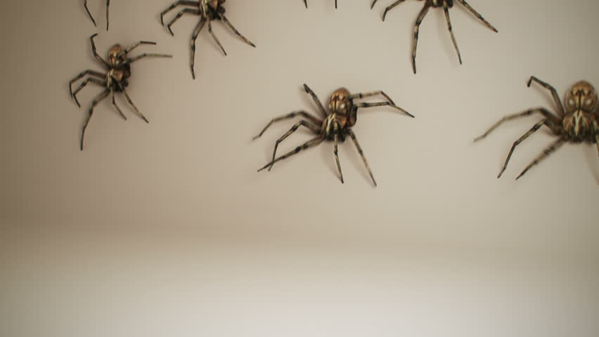 Dozens of big venomous spiders crawling across white wall. Spiders invading home.