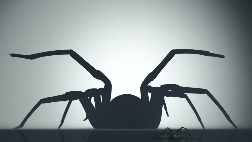 Big venomous spider watching his shadow on the wall. Animation of backlighted spider. - HD stock footage clip