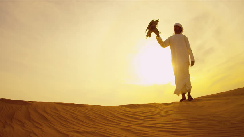 Trained bird of prey perching gloved wrist of middle eastern male owner at sunset desert location shot on RED EPIC