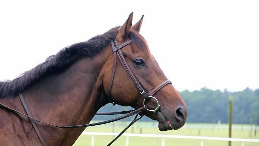 Brown Horse Wearing Bridle Side View With Pasture In ...