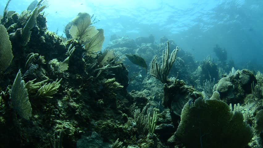 Scenics from coral caribbean reefs - HD stock video clip