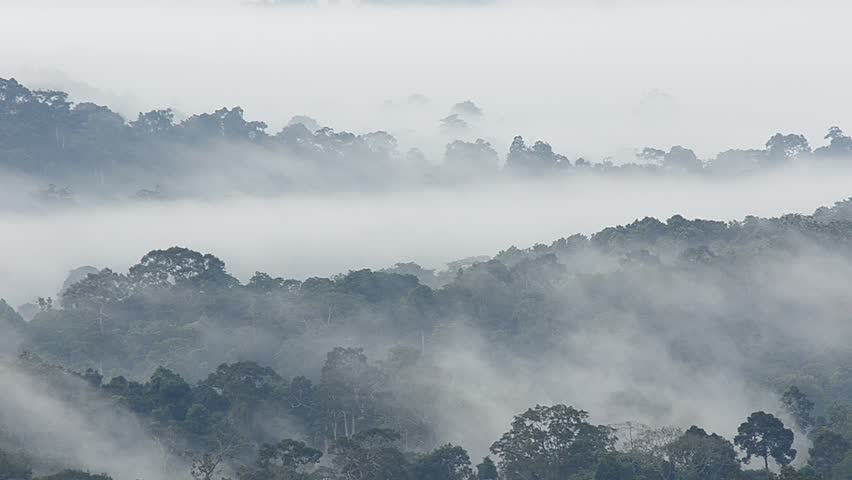 Morning fog in dense tropical rainforest, Misty mountain forest fog