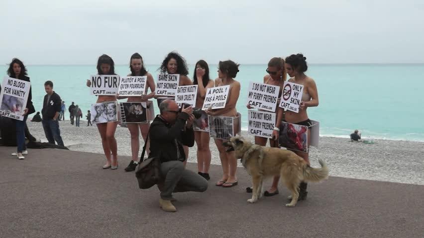 В Ницце открылась новая организация по защите животных