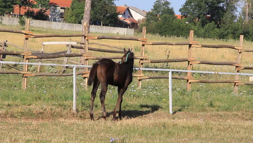 Foal near the wooden fence - HD stock footage clip