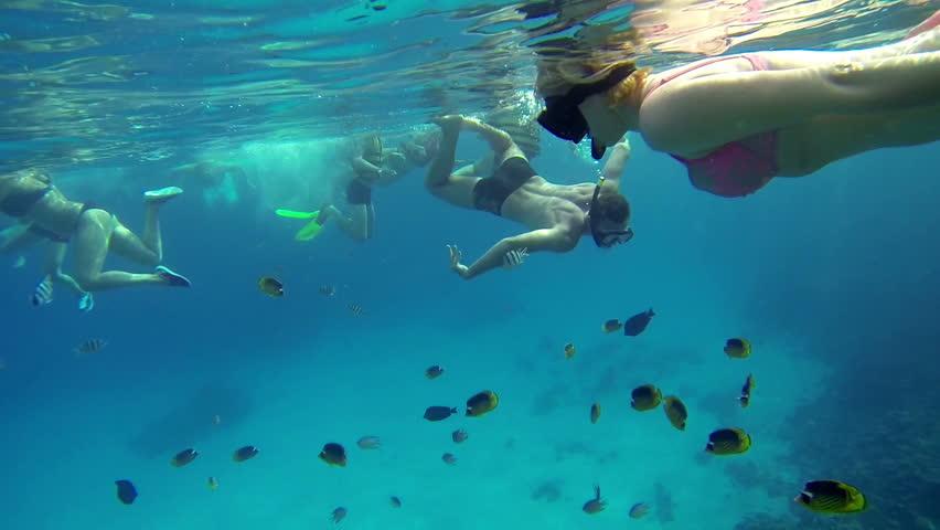 Blue Scuba Aquatic Reef Nature School Deep Diving Animal ...