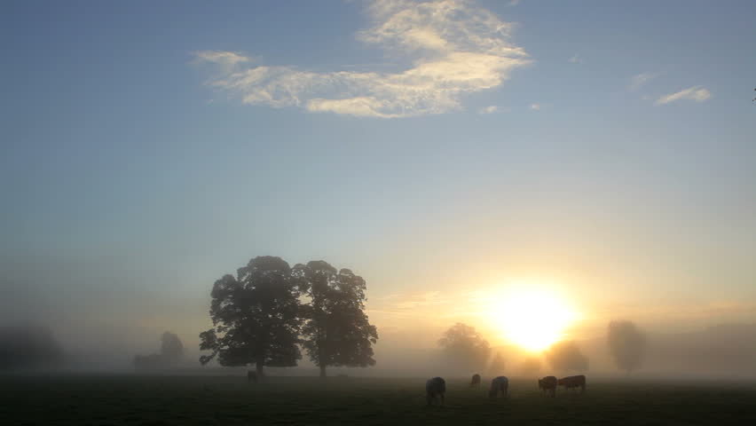 Cows grazing in a prarie under broad blue skies at sunrise in Usk Valley in South Wales, United Kingdom