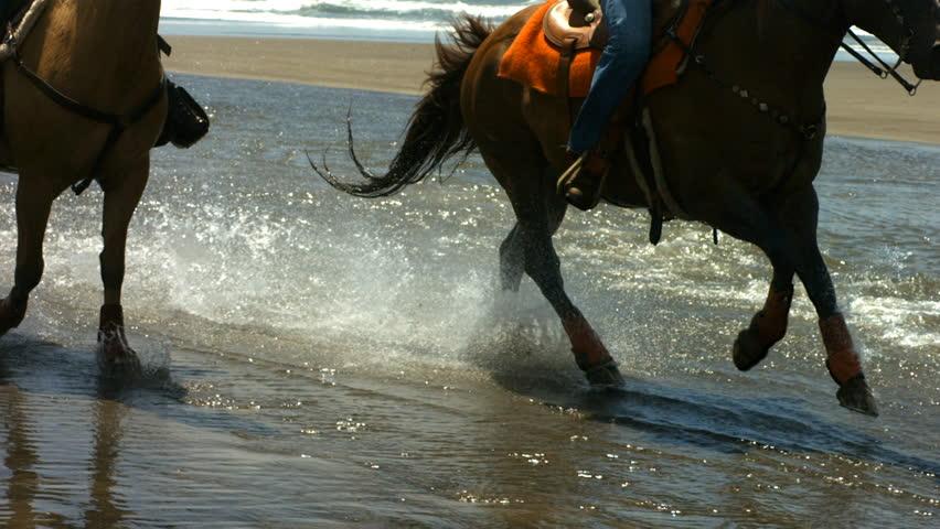 Horses running through water, slow motion