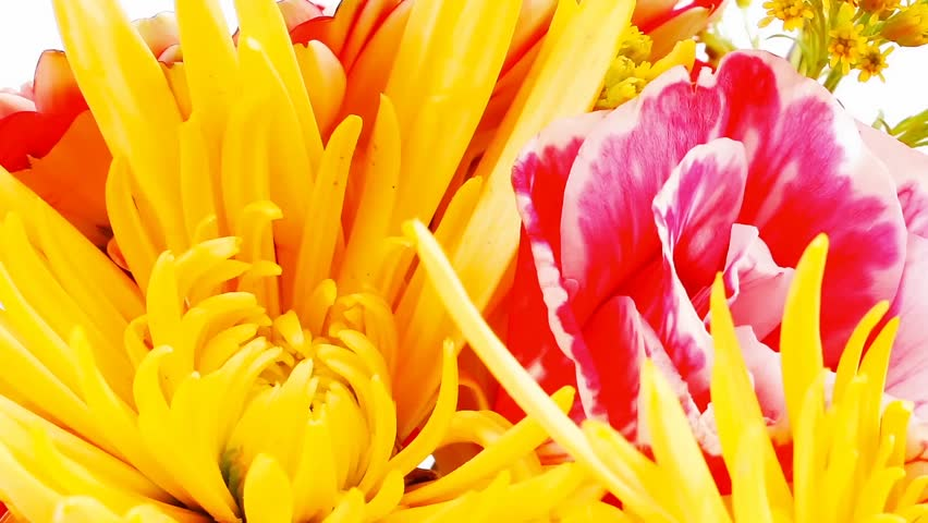 red and orange gerbera tuberose and gold mums flowers bouquet 1080p on a pure white background 1920x1080 intro motion slow hidef hd