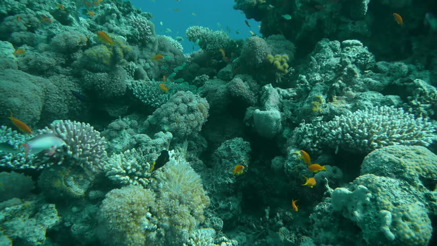 Israel, Eilat - nov 2010 - Corals of the Red sea | Shutterstock HD Video #4734266