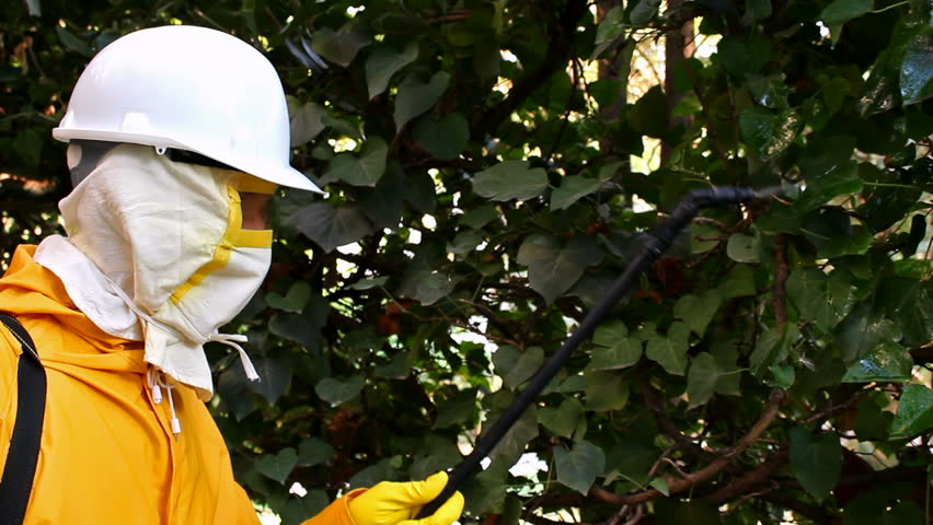 Disinsection ; specially equipped worker made pest in the garden,video clip