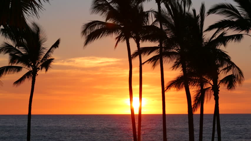 Palm trees and sunset #4746173