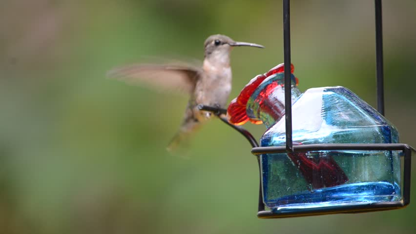 Female Ruby-Throated Hummingbird at a feeder. | Shutterstock HD Video #4769204