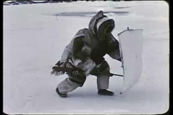 1950s - Eskimos in the Arctic make a camp and hunt for seals in the 1950s.
